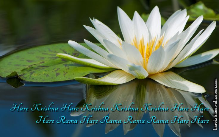 To view Holy Name wallpapers in difference sizes visit - http://harekrishnawallpapers.com/chant-hare-krishna-mahamantra-artist-wallpaper-014/