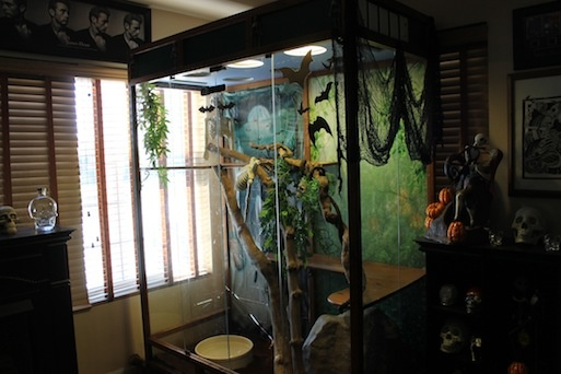 Alohanani's Decorated Enclosure for Halloween  Originally Posted by snigglezI did some of the decorations on my snakes enclosure today..... I will post some pics tomorrow morning... I still want to add a few more things but I have to go back to the .99 store ......Hallorenescene here are a few pics of Alohanani's Enclosure.... it took her an hour to start exploring she went from her holding dog pen to her enclosure to her cave t