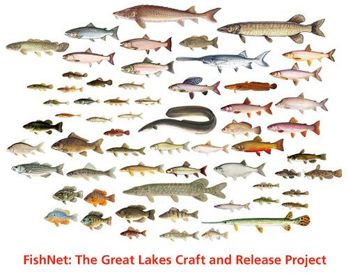 Great Lakes Fishes Chart