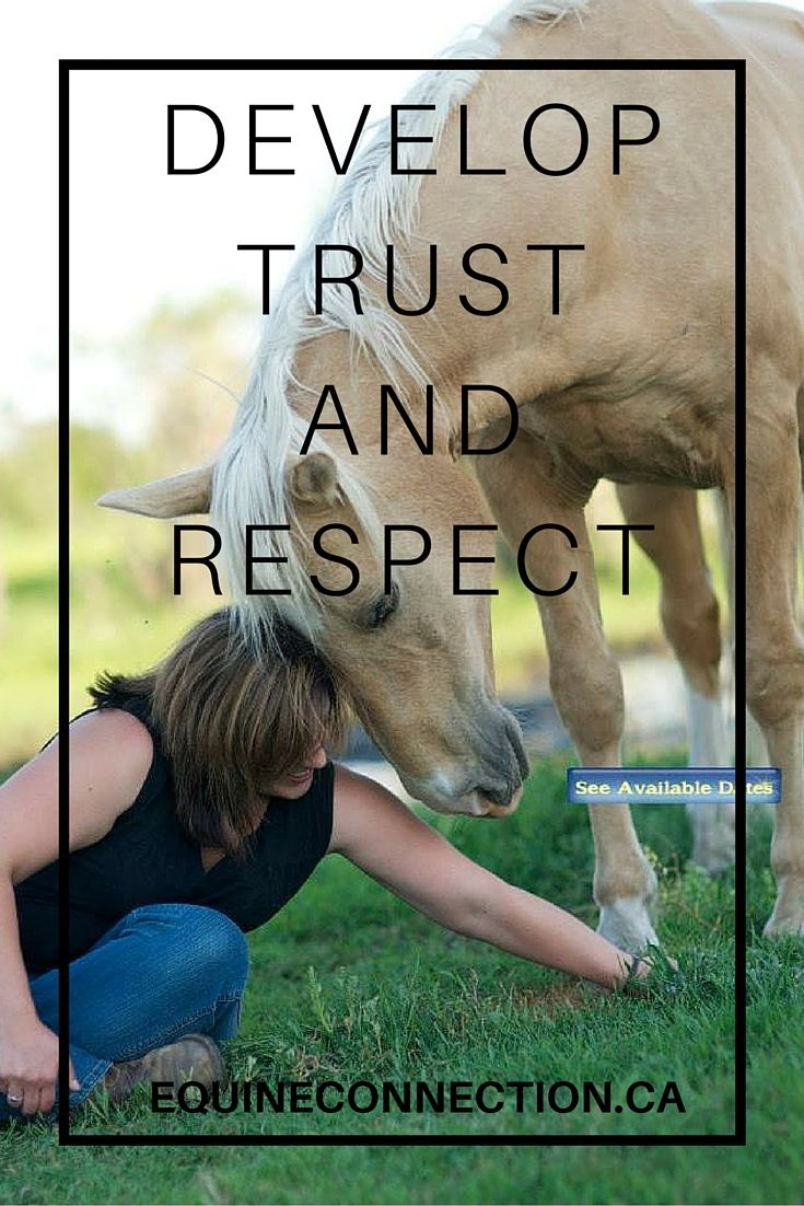 Horses require a leader that they trust and respect, just like we would love to have in the workplace. #equineconnection