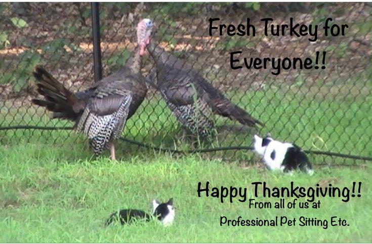 November pet care tips