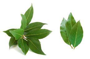 Bobkový list – vavrín obyčajný je známe korenie a v kuchyni dosť využíva. Bobkový list obsahuje éterické oleje, triesloviny a … Čítať ďalej