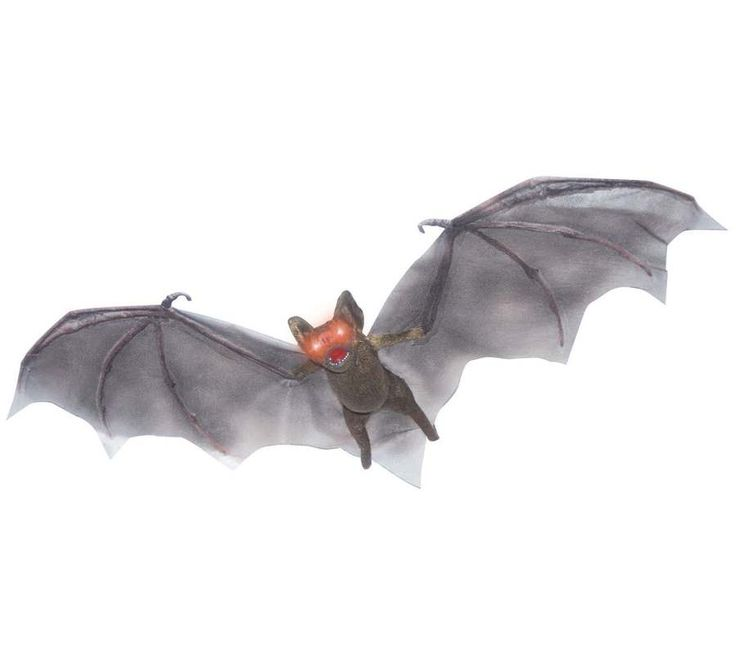 83 best images about animals bats on pinterest haunted for Animated flying bat decoration