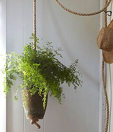 Hang a knotted rope planter for ferns By Shane Powers.  Photography by Gentl & Hyers.  Liven up an empty corner with this indoor hanging flowerpot...read how...