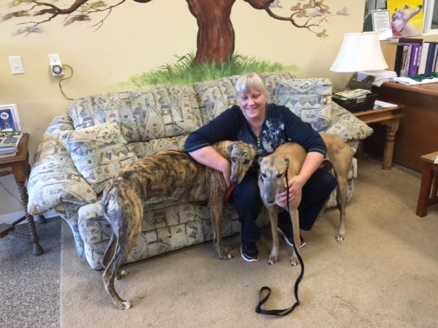 Davis with his new mom, Lori, and his real cousin, Bob.  Congratulations to this new #fureverfamily! #adoptaretiredracer #gpi #greyhound #greyhoundpetsinc #greyhoundsmakegreatpets