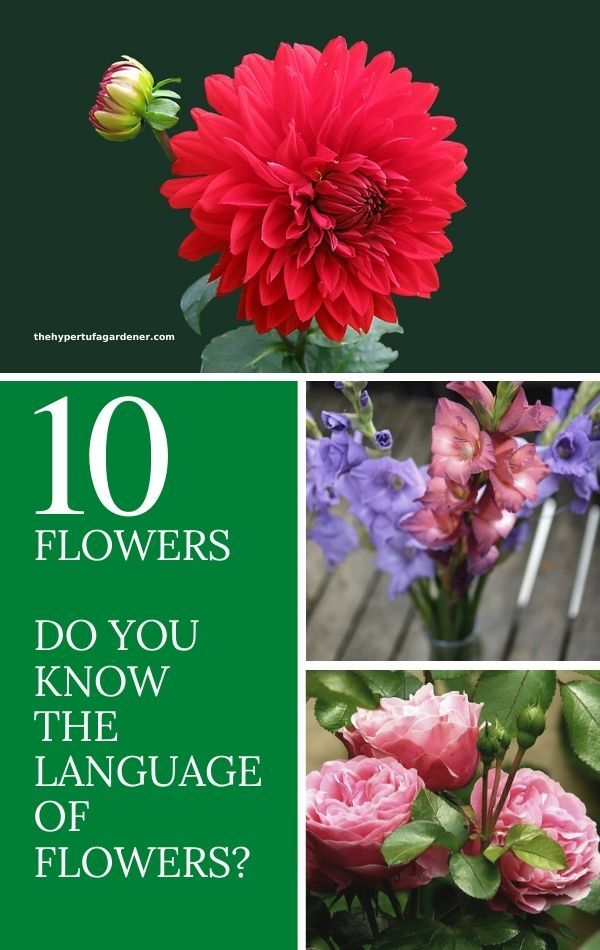 Flowers Have Always Had A Symbolic Meaning And We Still Connect Some Of Those Old Ideas With Flowers In The M