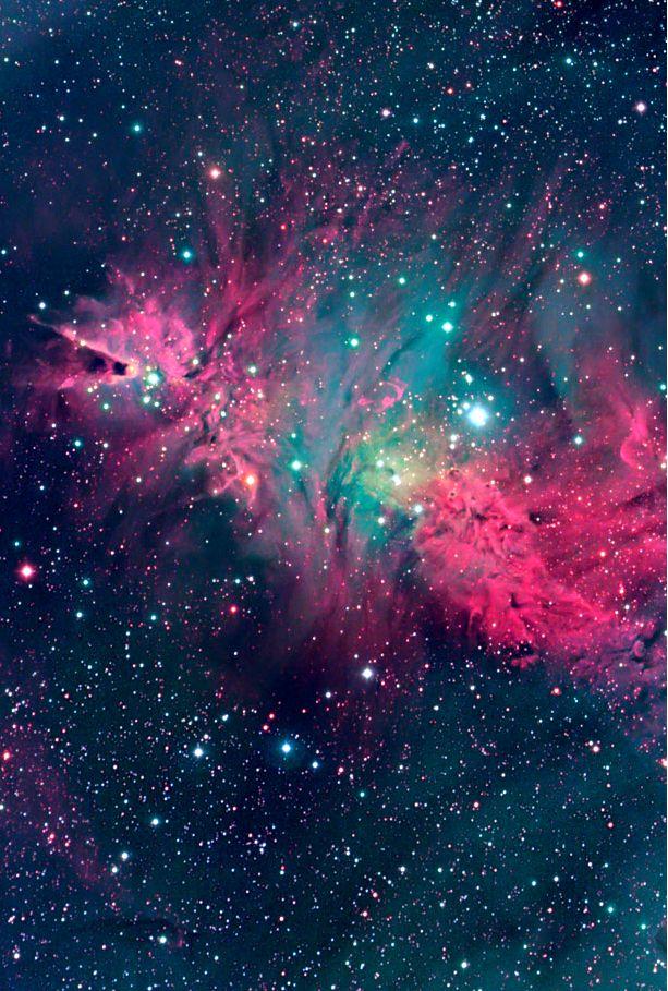 The Cone and Fox Fur Nebula
