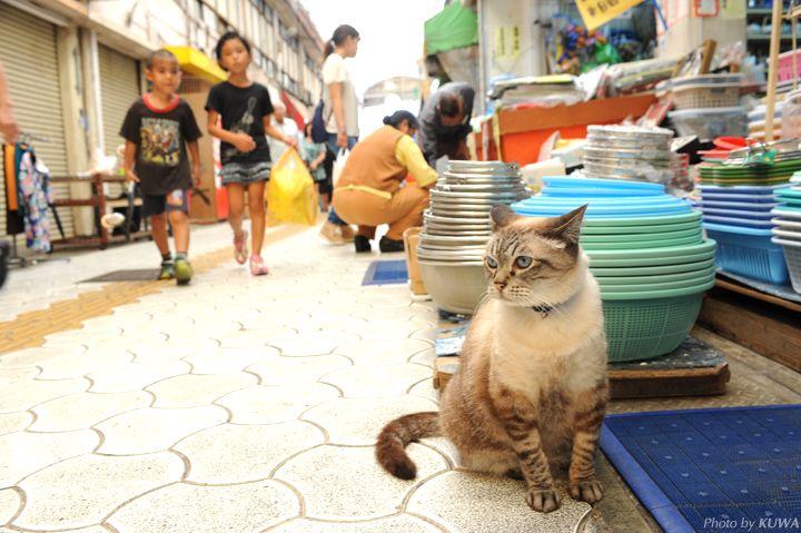 『マチグヮー散歩』 市場の看板猫たち | 沖縄CLIP