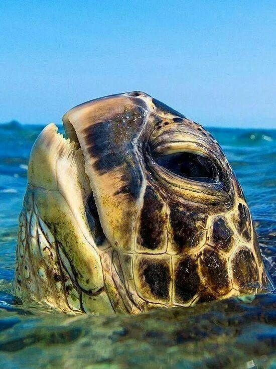 Prehistoric monster - mini version ( sea turtle)