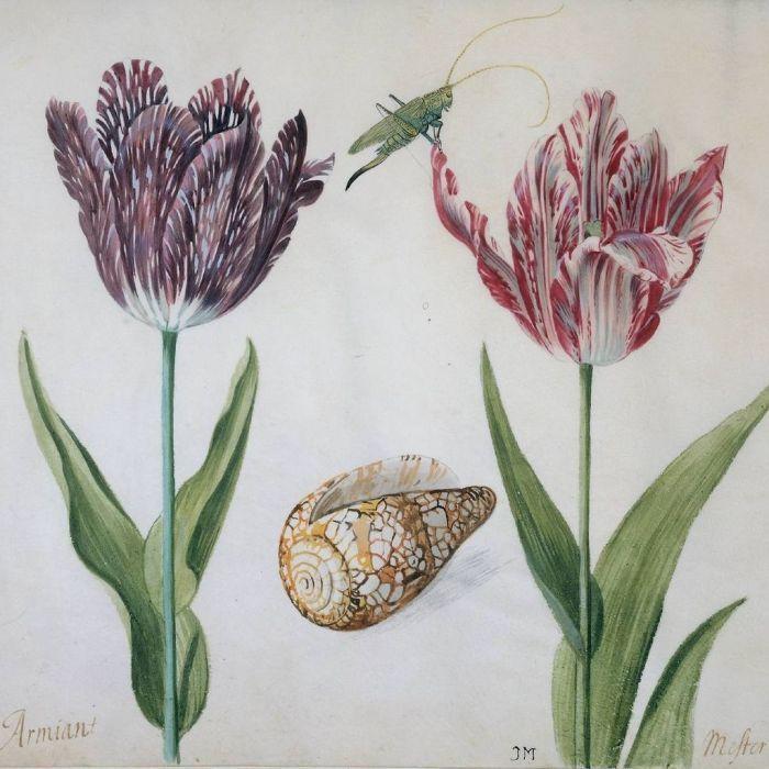 Два тюльпана, раковина и насекомое, Якоб Маррель,1634