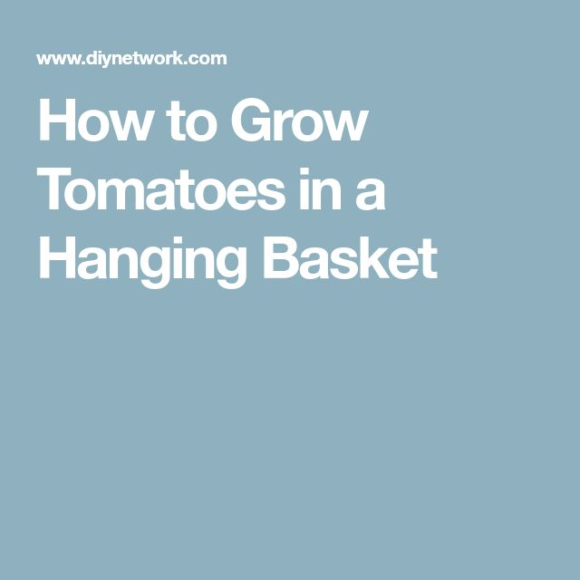 How to Grow Tomatoes in a Hanging Basket
