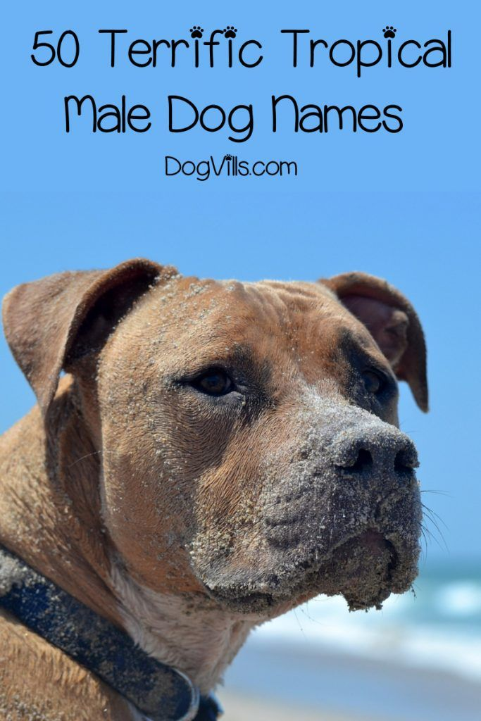 100 Tropical Dog Names For Male Female Pups Dogvills Dog Names Best Dog Names Dogs