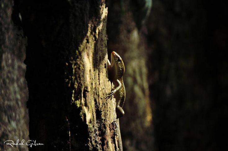 lizard by Radek Gibran
