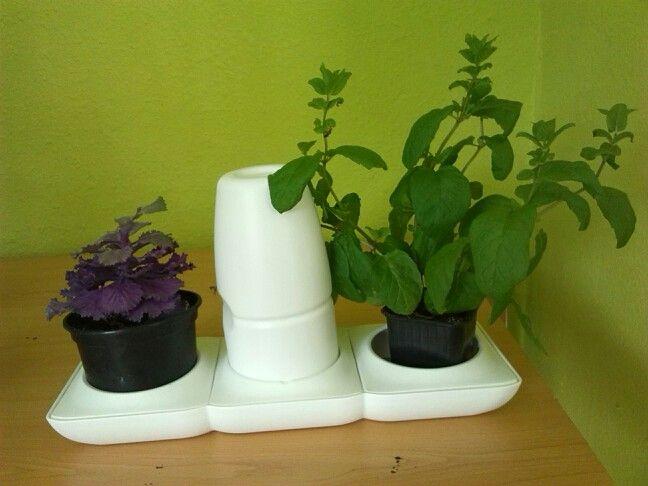Para ter sempre a man na nosa cociña as nosas plantas culinarias ou aromáticas. Con sistema de rego incorporado.