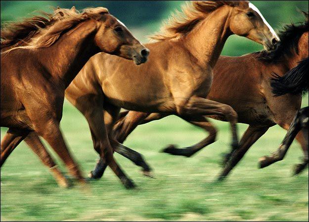 25+ best ideas about Wild horses running on Pinterest - photo#40