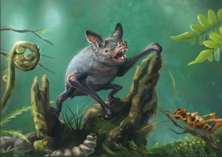 Extinct Burrowing Bat Discovered, and It Was Giant      The prehistoric mammal lived in modern-day New Zealand millions of years ago. https://news.nationalgeographic.com/2018/01/giant-burrowing-bat-discovered-new-zealand-gondwana-spd/?utm_campaign=crowdfire&utm_content=crowdfire&utm_medium=social&utm_source=pinterest #nature