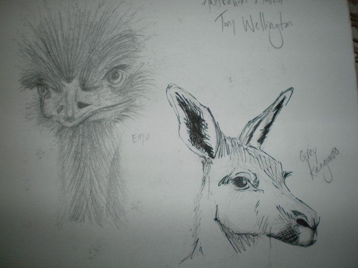 Sketches kangaroo emu