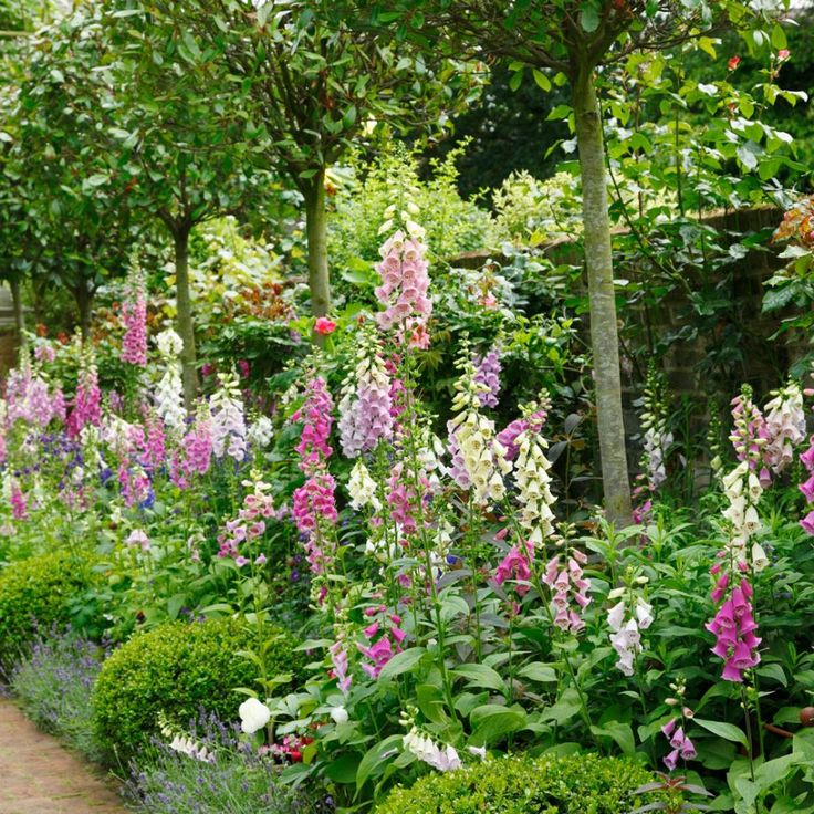 Jobs to do in the garden in May – May gardening jobs
