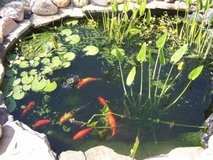 7 best images about koi pond on pinterest koi fish pond for Build your own koi pond