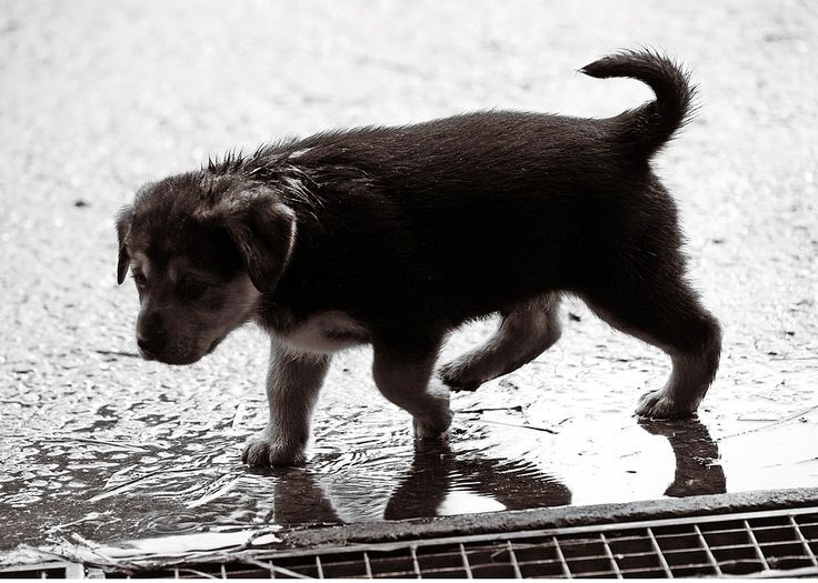 pet emergency preparation list
