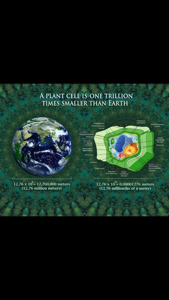 Planet cells