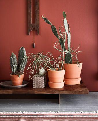 Terracottapotter, mørke tremøbler og jordfarger er en trend vi synes er superspennende.