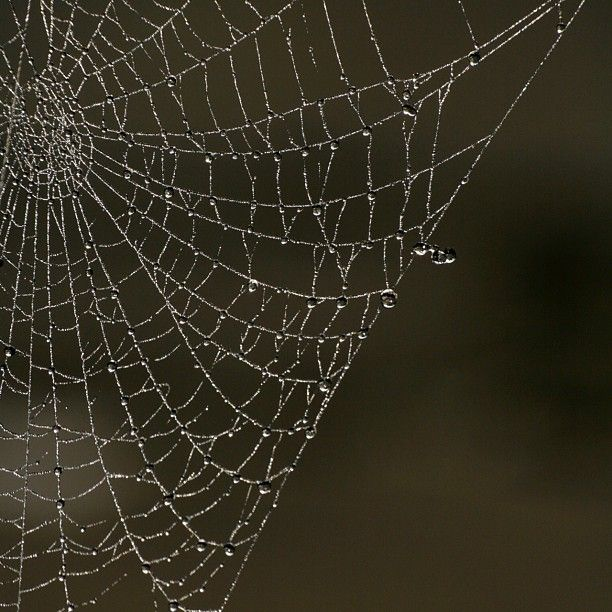 Simple, yet beautiful close up shot of a spider's web. Photo by Andy Hay (rspb-images.com) #RSPB #photography #nature
