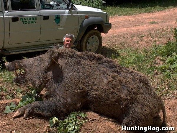 Biggest Ranch In Texas | Huge Hog Killed in Texas | Hog Hunting
