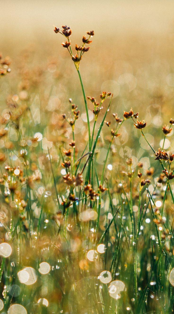 Floral Background Flower Balance Earth Nature Peaceful Motivation ...
