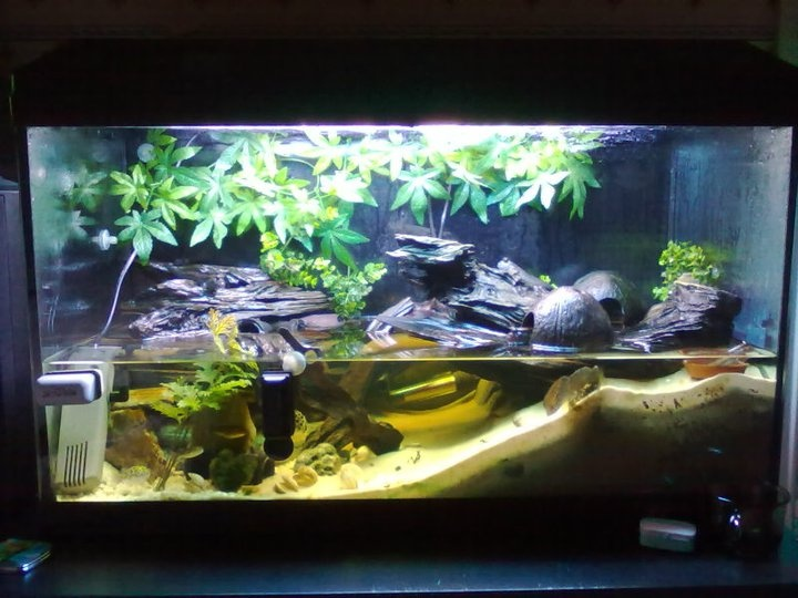 Mudskippers live in these super cool tanks too animals for Aquarium fish online