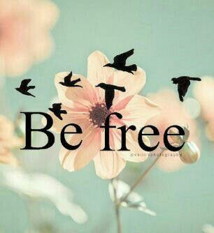 ~Zahme Vögel träumen von der Freiheit, wilde fliegen!~