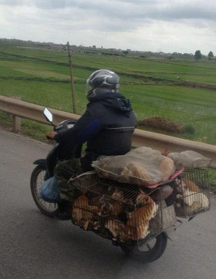 Cat Man from Vietnam - Pet Transport! | The Travel Tart Blog