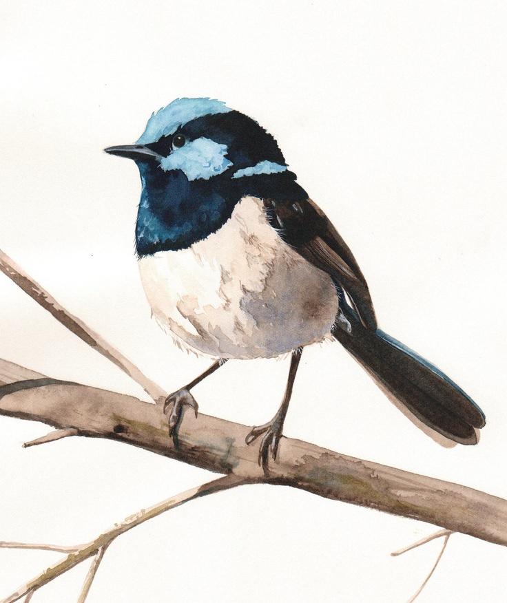 Fairy Wren Bird Art Archival print of watercolor painting A4. $20.00, via Etsy.
