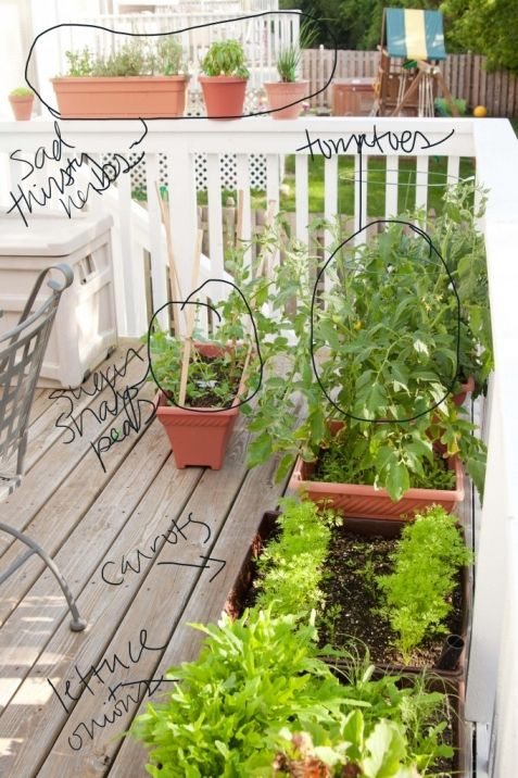 Vegetable gardening in containers » Peanut Blossom - See how easy it is to grow things!