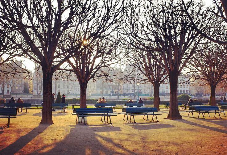 Le square Jean XXIII SUR L'île de la cité. #paris #igersparis #igersfrance