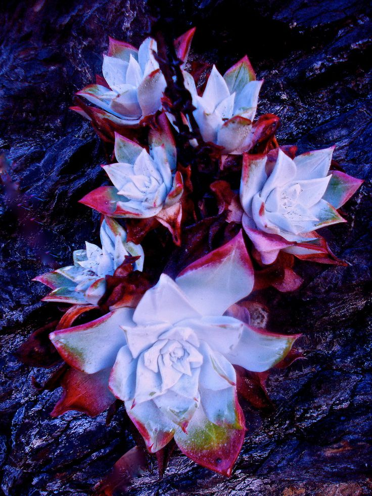 rare-flowers-strange-flowers-flowers-32600608-900-1200.jpg (900×1200)
