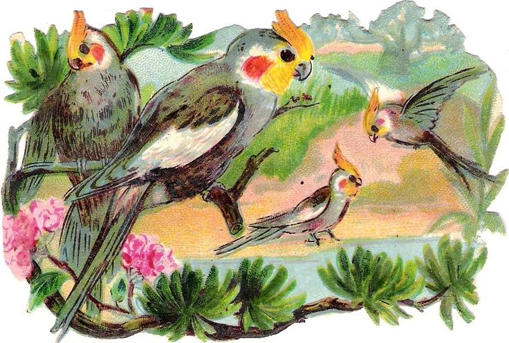 Oblaten Glanzbild scrap die cut chromo Vogel bird  Kakadu Papagei parrot