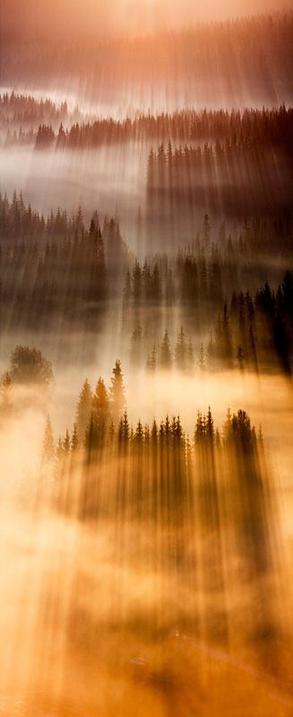 sunset, sunbeams, trees, light, mist