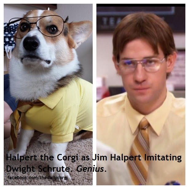 Sunday Funnies: Corgis in Costumes -- Pop Culture Edition!
