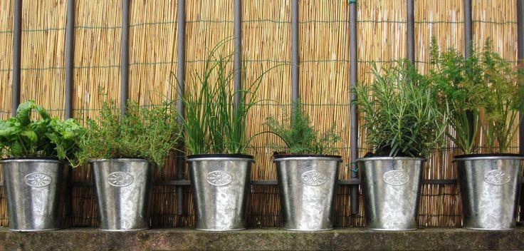 Le piante aromatiche.