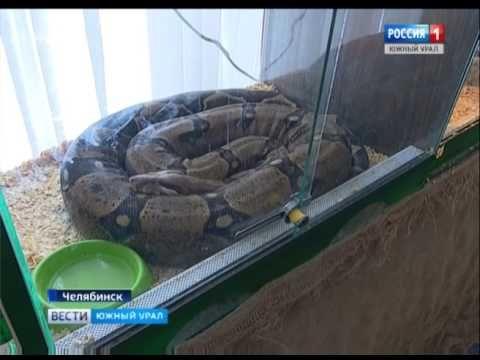 Скандал с животными в парке Пушкина