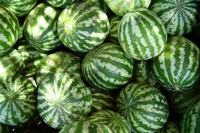 Watermelon Nutrition Facts - Did you know that the Japanese have perfected the art of growing a square watermelon? While the watermelon is in early growth stages...