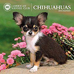 American Kennel Club Chihuahuas 2018 Wall Calendar