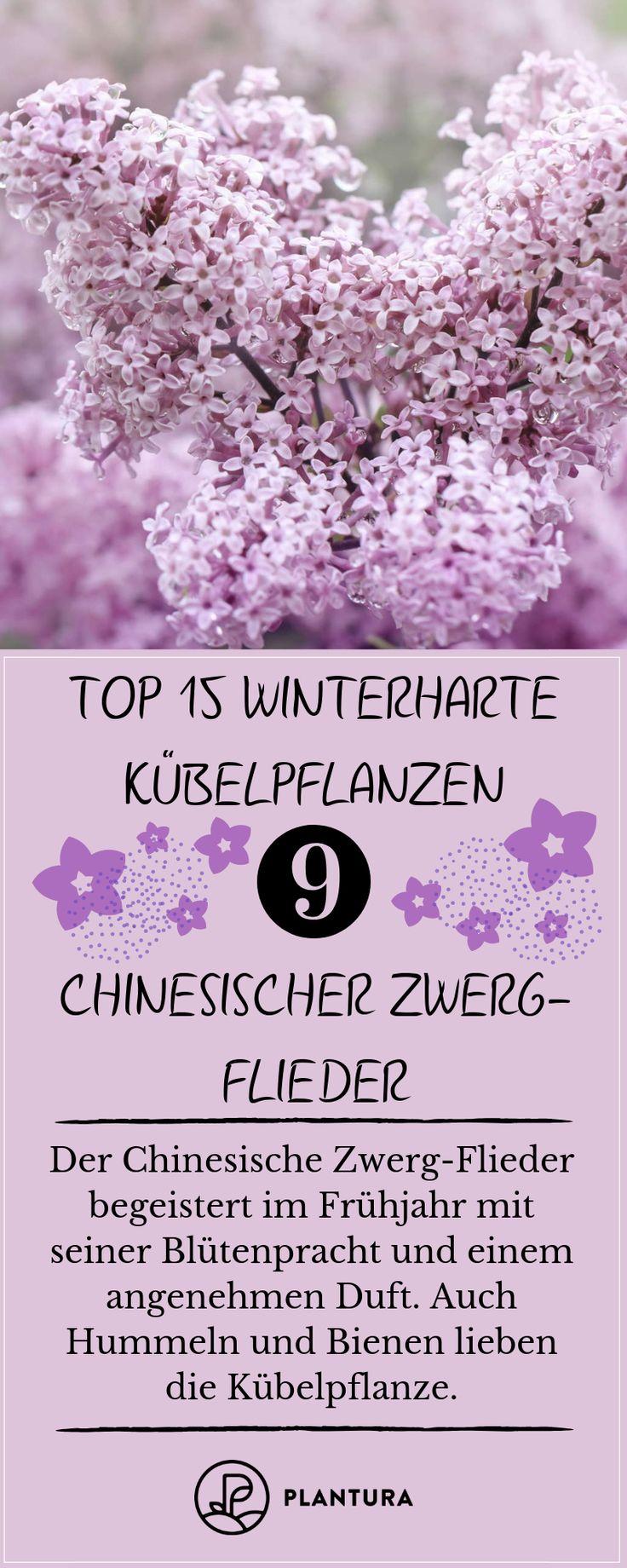 Winterharte Kübelpflanzen: Unsere Top 15
