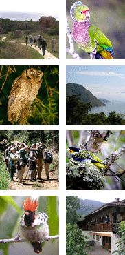 Up next on Pete's birding adventures....birding tour with FIELD GUIDES - Spectacular Southeast Brazil!
