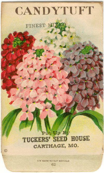 Vintage Flower Seed Packet Tuckers Seed House by gardenlelah