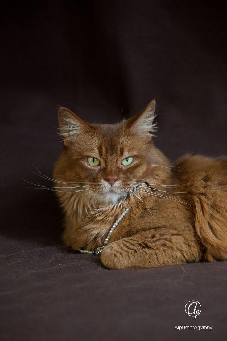 Animal images by Alpi Photography | www.alpi-photography.com | #alpiphotography #cat #Flammi