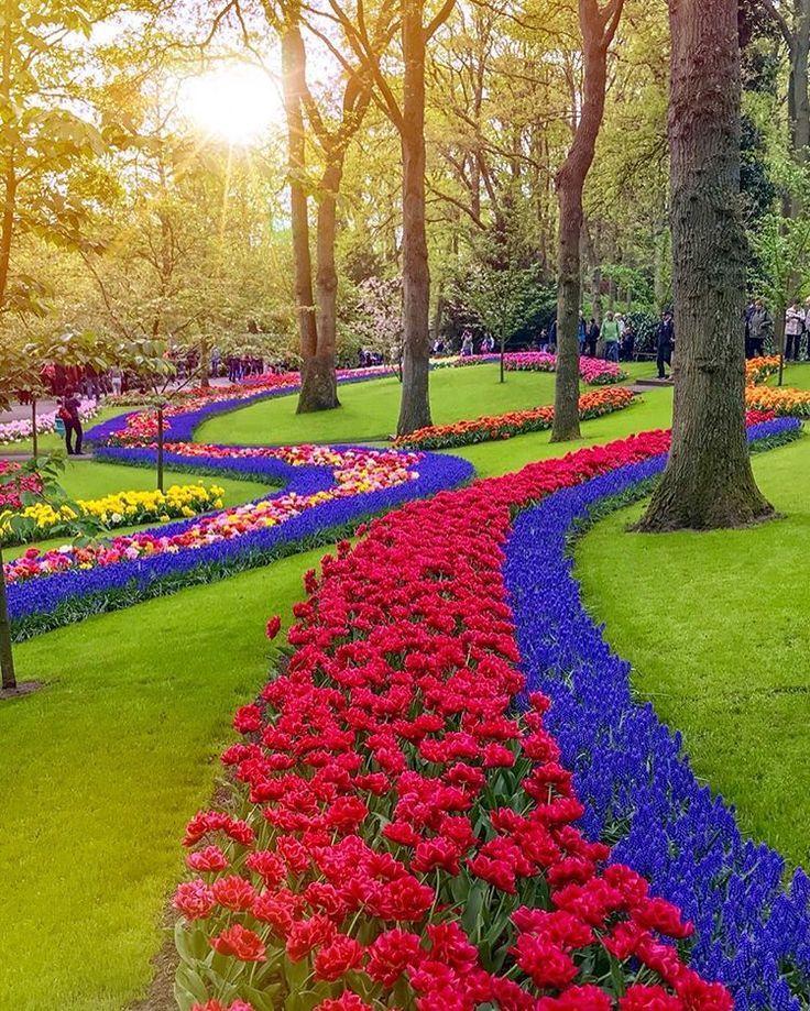 Der Tulpengarten Die Niederlande Tulpen Garten Schone Landschaften Blumen Anbauen