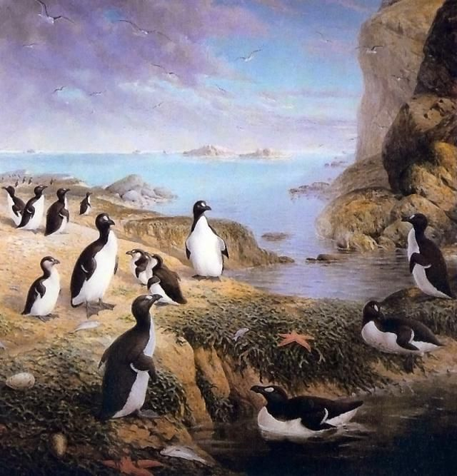 Meet the Great Auk, the Penguin-Like Bird of the Northern Hemisphere: Great Auks Mated for Life