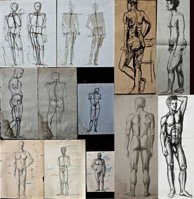 studii anatomie artistica
